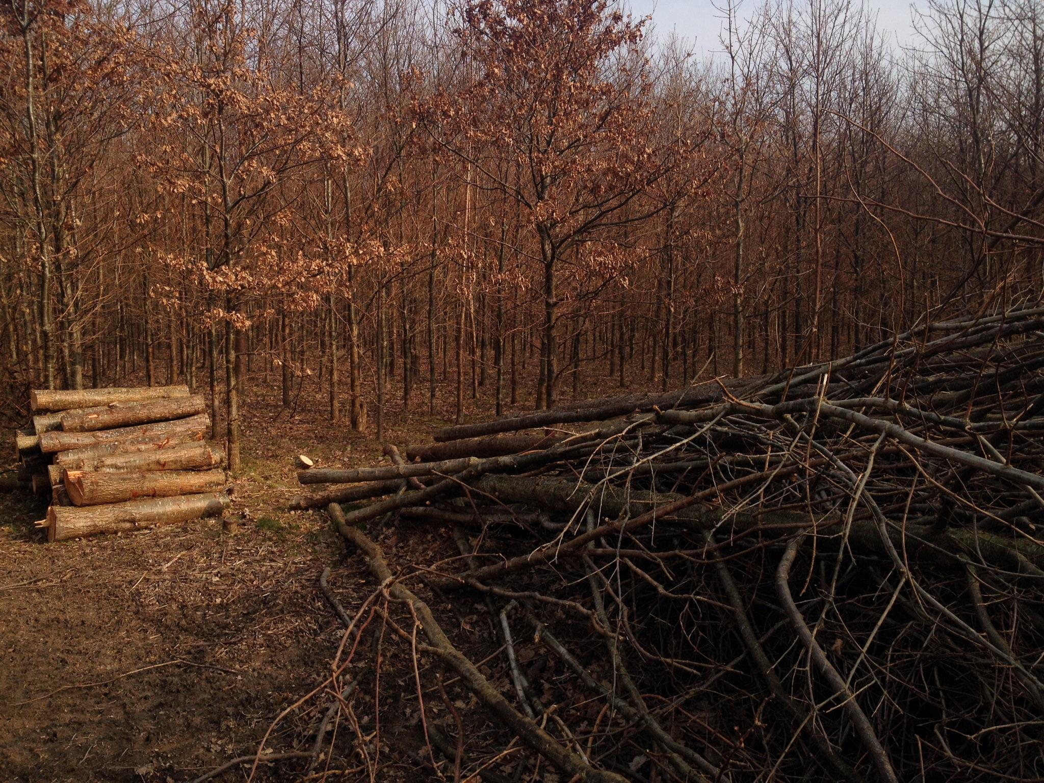 Oprydning i skoven