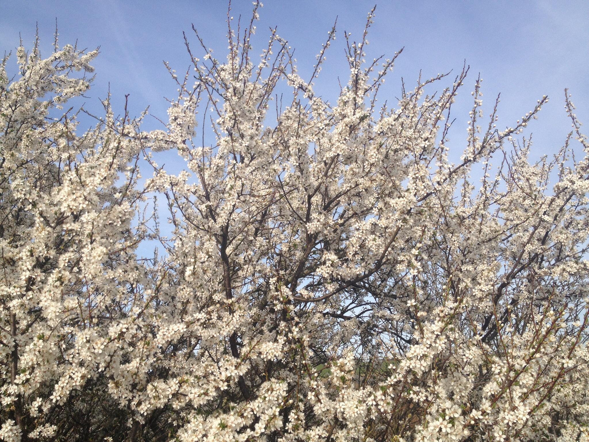 Forår i Danmark