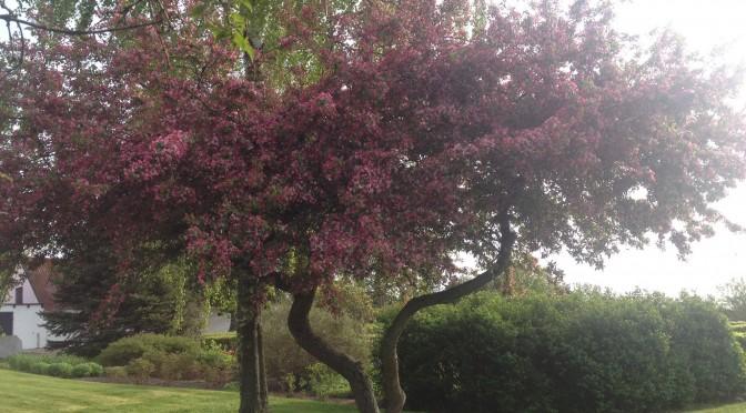 Havens smukkeste træ