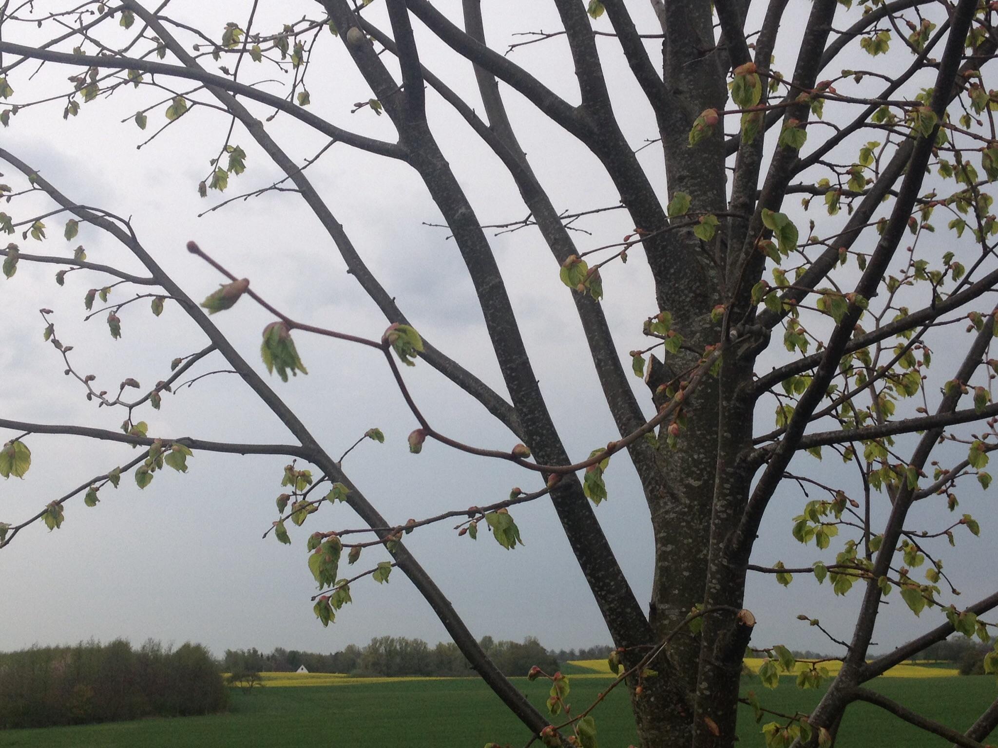 Stilhed før stormen?